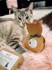 Organic Treat Catnip Boxed Sachet - Cats go wild for this crazy gift!